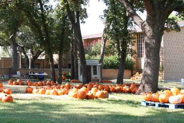Pumpkin Patch at First Christian Church in Arlington