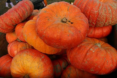 pumpkin patch FM
