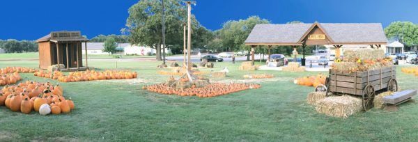 pumpkin patch SJA